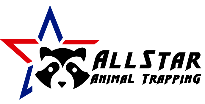 All Star wildlife removal